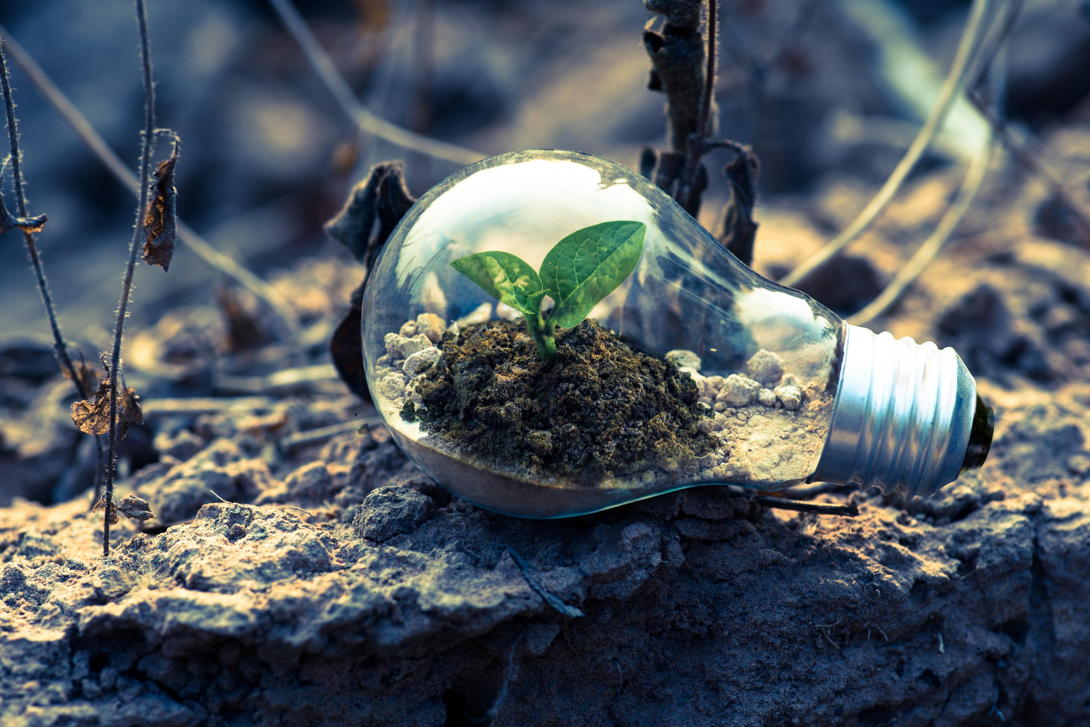 L'environnement, victime du numérique ?